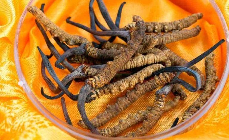 Cordyceps sinensis benefici
